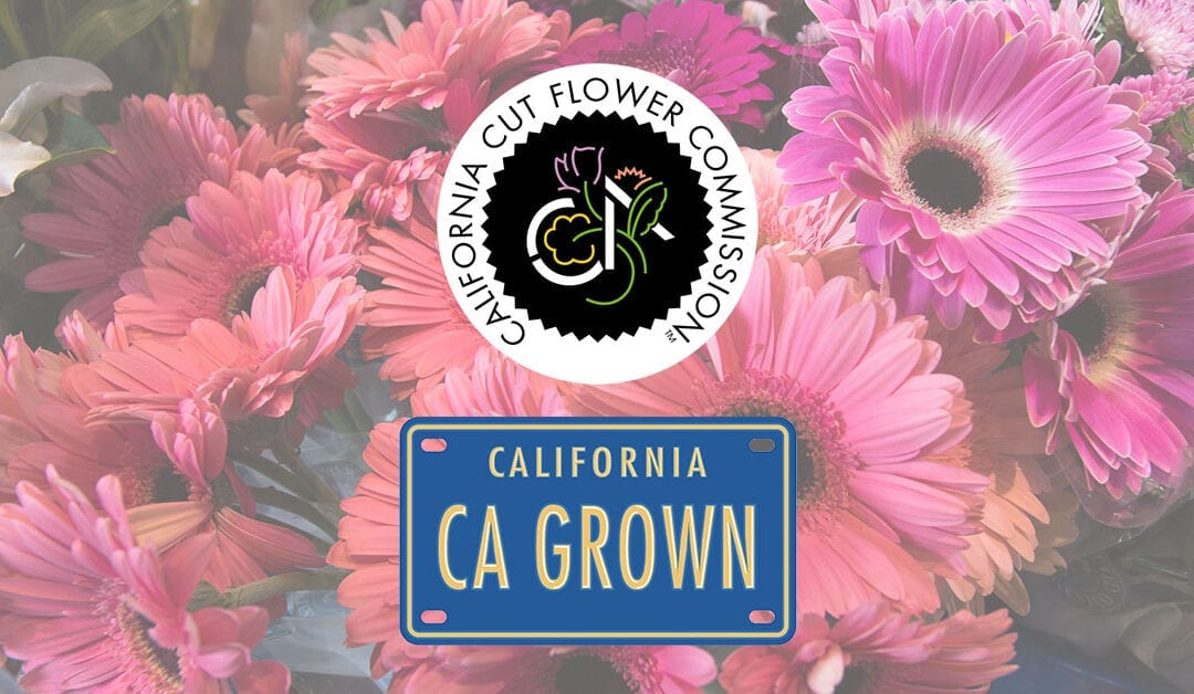 "Press Release: LOCAL MARKETING AGENCY WORKS WITH CALIFORNIA FLOWER GROWERS TO CREATE SHORT-FILM ""FARM TO FLOAT: THE MAKING OF CALIFORNIA GROWN ROSE PARADE ENTRIES""."