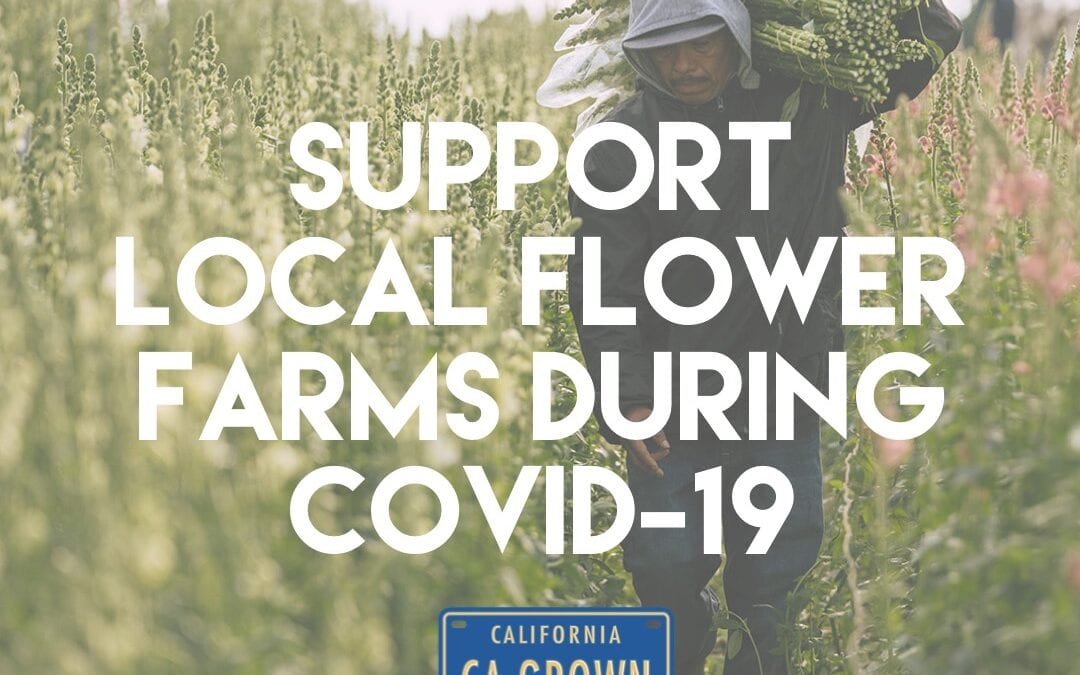 Protected: Saving The California Flower Farmers